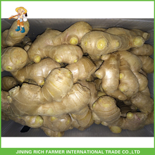 High Quality Fresh Air Dry Old Yellow Color Ginger Wholesale Low Price
