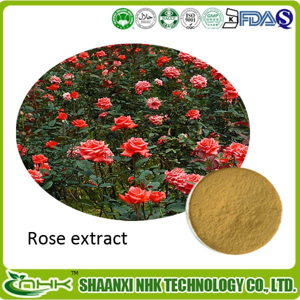Health Product High Quality Rose Extract 10:1/20:1