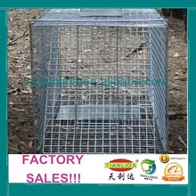 Glavanized Fox Trap Cage, Collapsible Fox Cage Trap,Live Fox Traps Made In China--TLD2015A