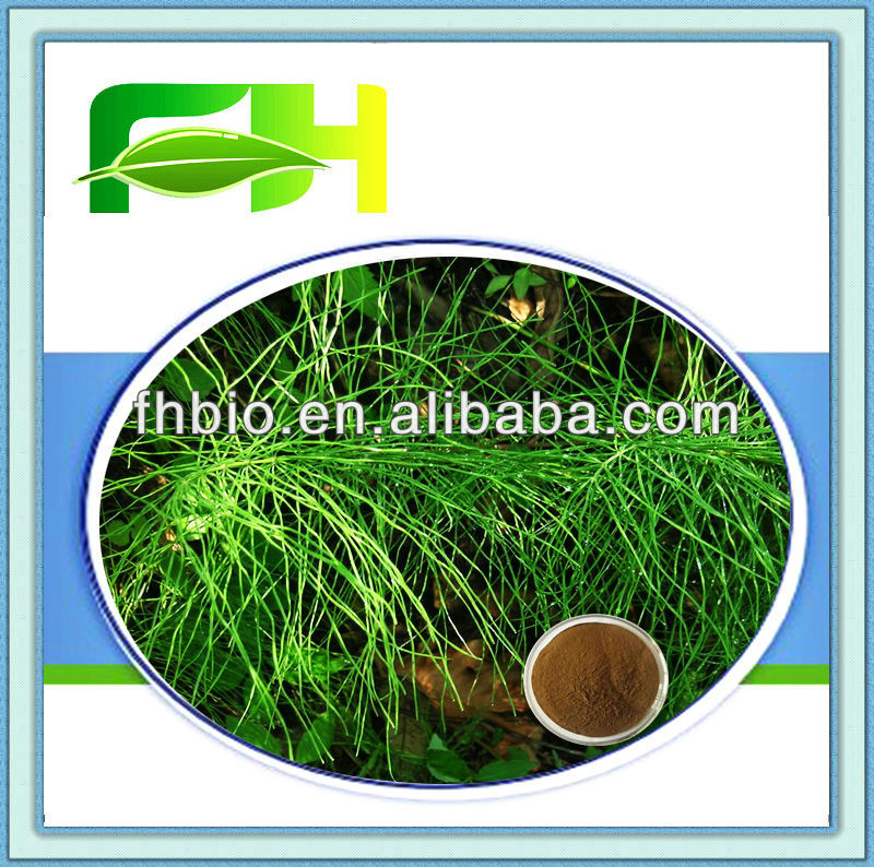 Best Quality Natural Horsetail P.E.