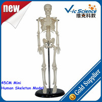 45CM Mini Human Skeleton Model