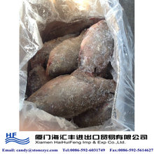 Frozen live tilapia <strong>fish</strong> for sale