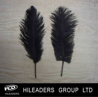 Hat Accessory Ostrich Feather HH565