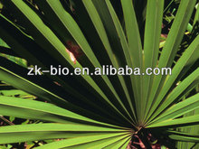 Natural Fatty acid Saw Palmetto extract