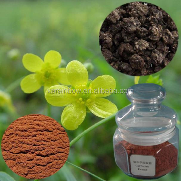 ISO Factory Supply Cat's Claw Extract, Catclaw Buttercup Root Tuber Extract Powder