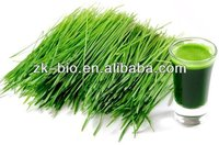 Hot sale organic Barley grass juice powder