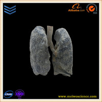 lung anatomical models producer