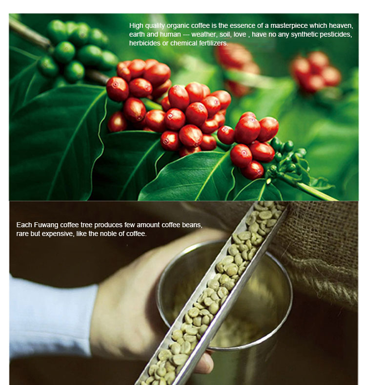 Arabica Green Coffee Beans bulk instant coffee slimming coffee