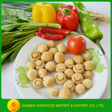 Choice grade canned button mushroom whole with halal certificate