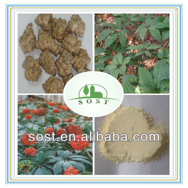 Wholesale Plant Extract Powder Panax Notoginseng