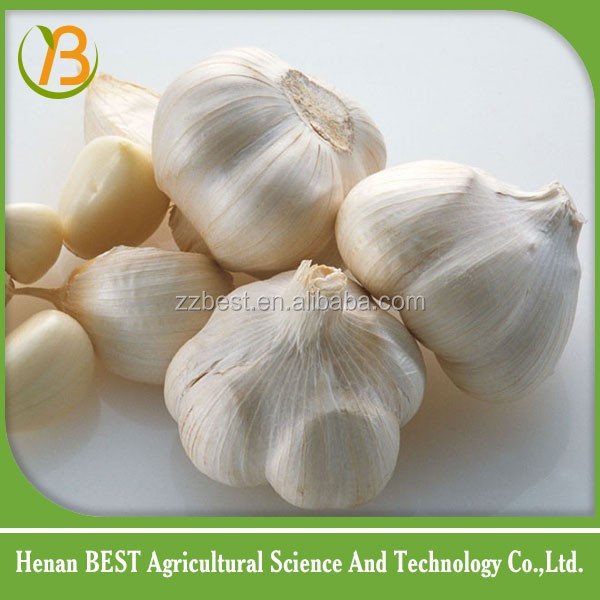 fresh garlic for sale