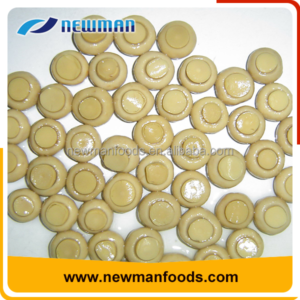 Fresh material whole salty cheap price freeze canned mushroom sliced