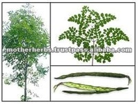 Natural Moringa Oleifera Leaves