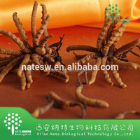 Cordyceps Mycelium Extract Powder Chinese caterpillar fungus powder