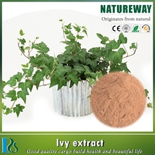 Top quality ivy leaf extract hederacoside c