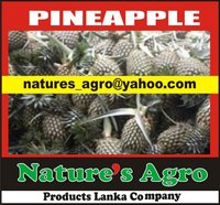 Organic Fresh Pineapple from SRI LANKA-0094772377797