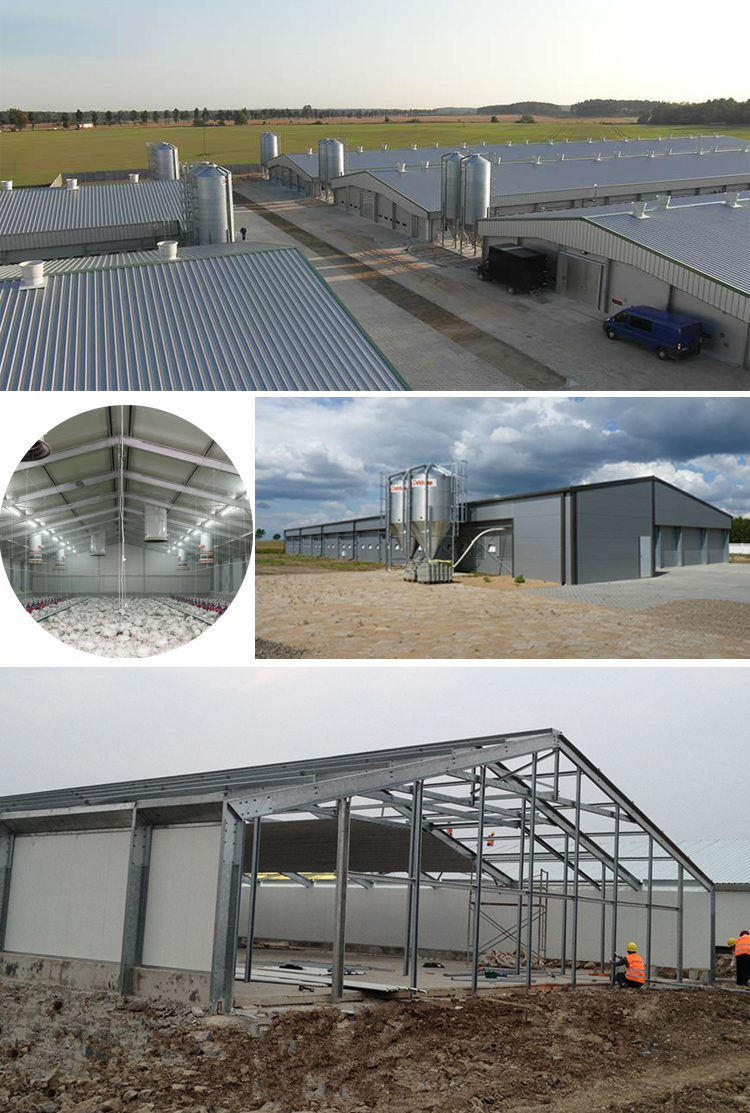 Low Cost Steel Structure Frame Poultry Shed For Broiler and Layer Chicken