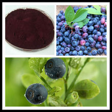 GMP factory supply high quality 25% procyanidin Blueberry Extract powder