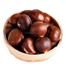 Wholesale China Organic Fresh Chestnuts For Canada