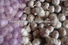 China Super White Garlic - Spicy Vegetable For Export