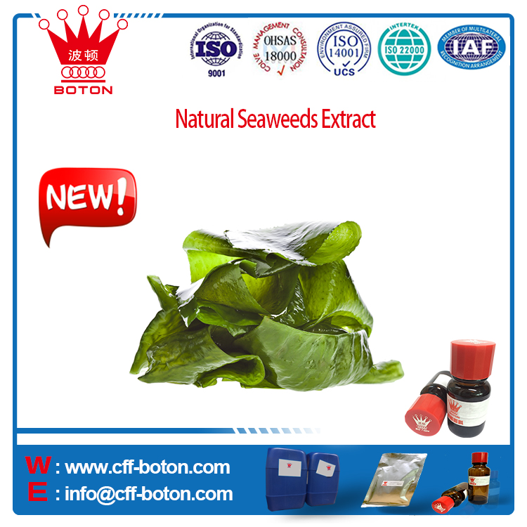 Natural Seaweeds Extract