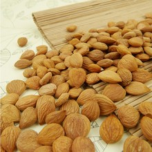 Hot selling dry Common bitter apricot kernels (GF4) Chinese