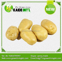 China fresh holland potato specifications supplier (75-100gram)(100-150gram)(150-250gram up)