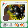free sample 100% natural anthocyanidin blackcurrant extract powder