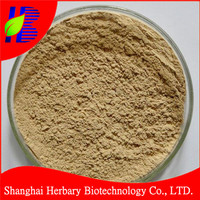 High quality green coffee bean extract powder