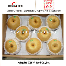 fresh ya pear and singo pear supplier in china pear factory