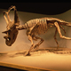 Zigong artificial dinosaur fossil and skeleton for museum