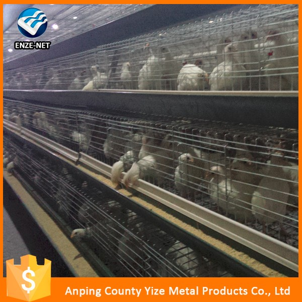 manufacturing metal frame chicken egg layer cages poultry breeder house design in China