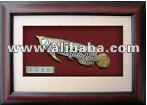 Pewter Arowana (Gold Plated) in Wooden Frame