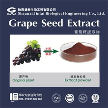 Free Samples Organic Grape Seed Extract Powder Polyphenols >70%