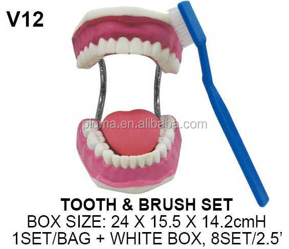 Eucational tooth brushing model