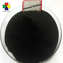 High Quality seaweed extract powder, seaweed fertilizer, kelp powder