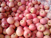 fresh fuji apples