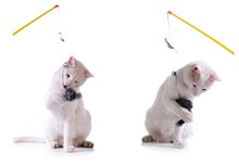 Funny Pet Cat Kitten Play Feather Teaser Rod Wand Playing Toy With Bell