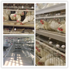 poultry large bird cages for breeders and chicken