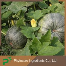 Hot sale best share plant source organic pumpkin seeds
