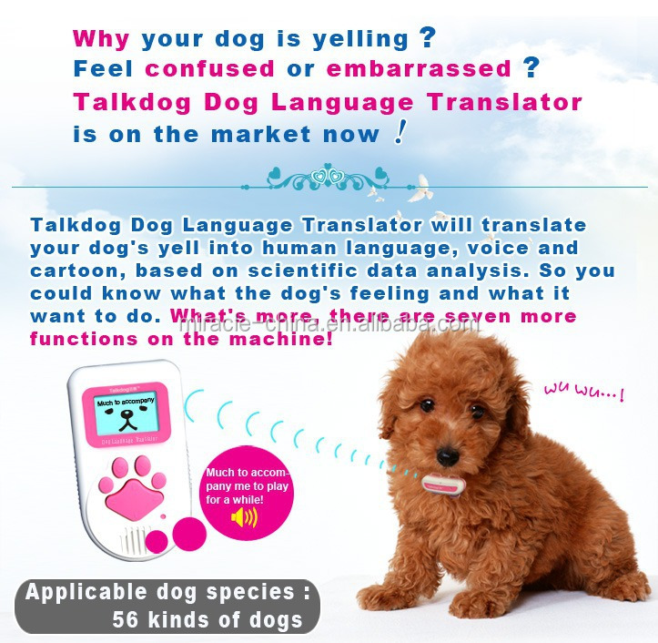 Translating Dogs Barking And Body Language