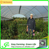 searea Hot sale commerical farming single-span plastic greenhouse
