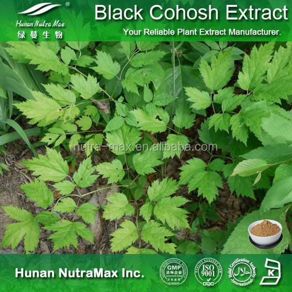 100% Natural Black Bugbane Extract,Black Snakeroot Extract,Caulophyllum Thalictroides Extract