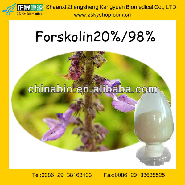Coleus Forskohlii Extract from GMP Certified Manufacturer