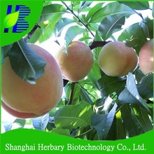 Hot sale agriculture seed peach seeds for planting