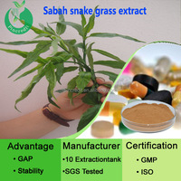 GMP Factory supply top quality Clinacanthus nut/Sabah snake grass powder/Clinacanthusnutans(Burm.f.)Lindau