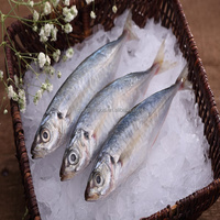 New Arrival Frozen whole round/Healess tailless gutting Blue scad Seafood