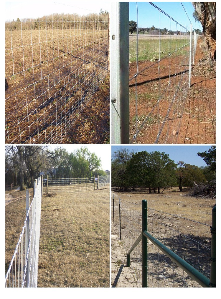 top sheep and goat agricultural / farm fence