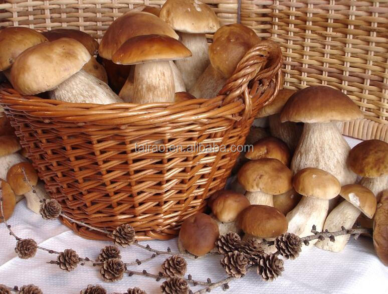 Белые грибы покупаю