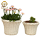 Decorative Use and Wicker Material White Garden Flower Pots